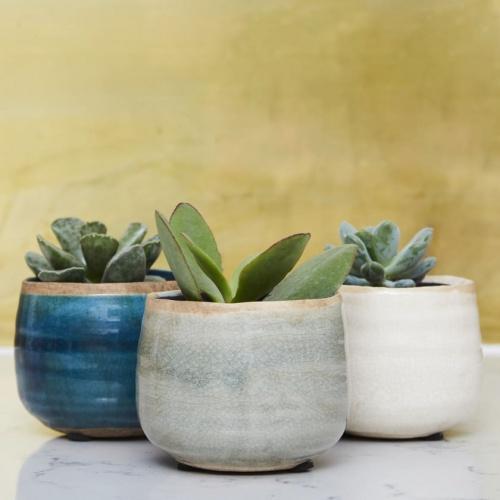Patch Plants - Succulente