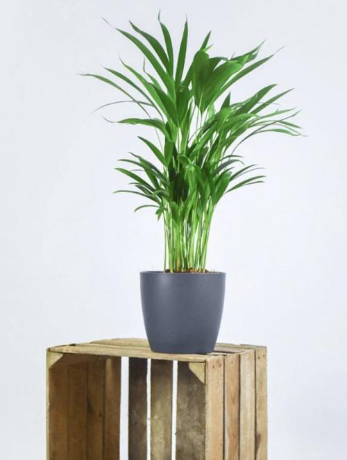 Bakker - Plante d'interieur