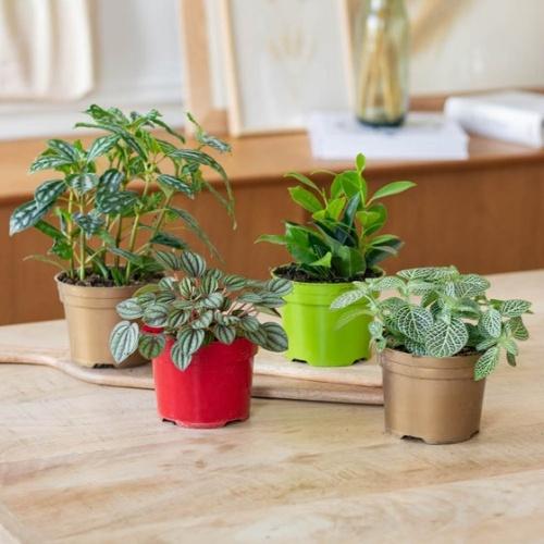 Bergamotte - Assortiment de plantes vertes