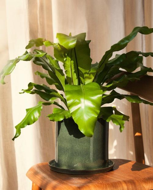 Zara Home - Pot de fleurs avec soucoupe