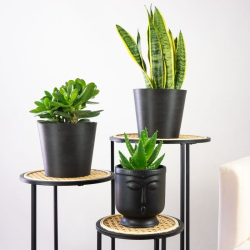 Be Green - Assortiment de plantes