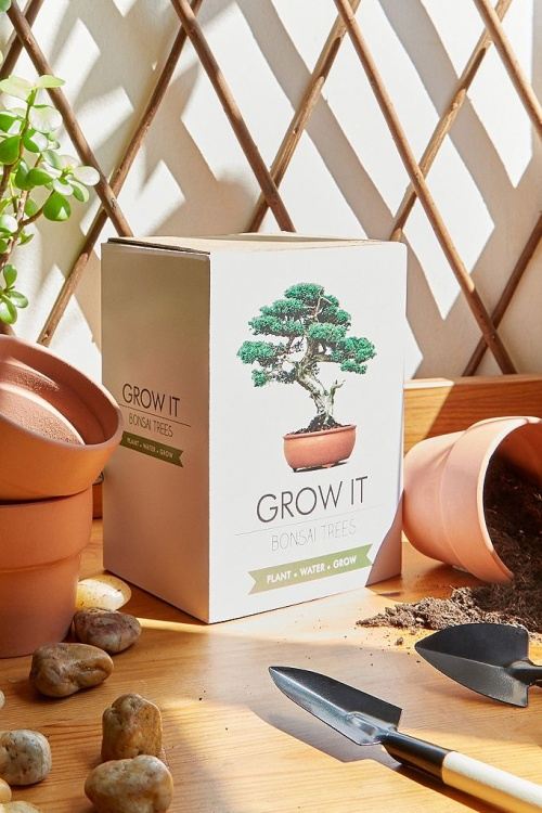 Grow it - Kit de culture pour bonzai