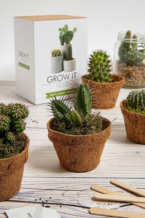 Grow Fit - Kit pour cactus