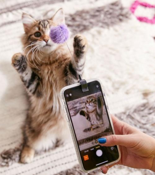 Clip pour selfie de chat