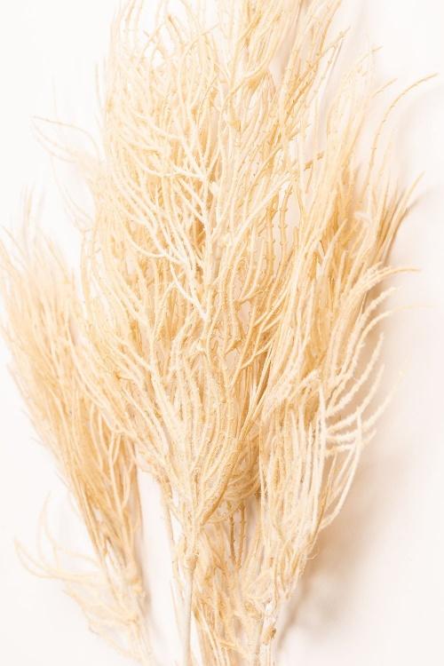 Sklum - Herbe de la pampa
